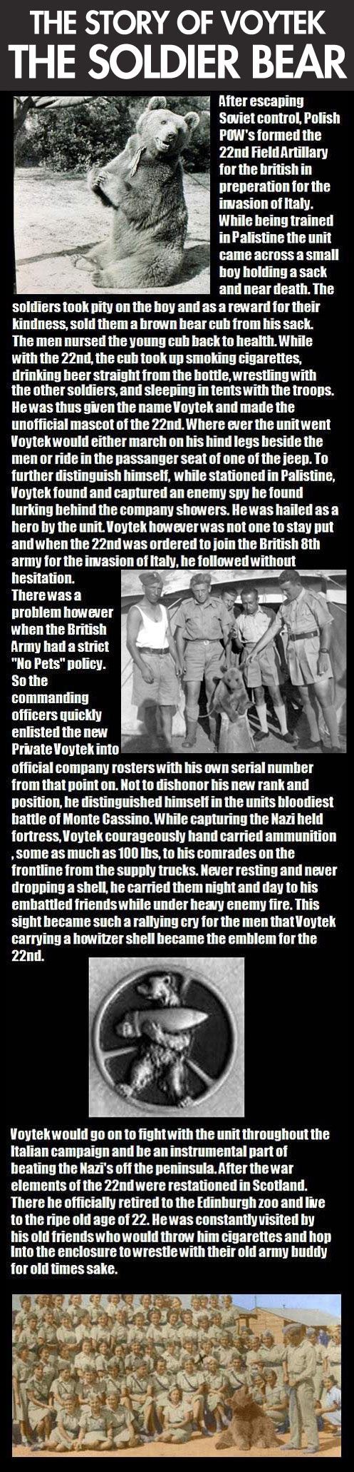 The story of the soldier bear…
