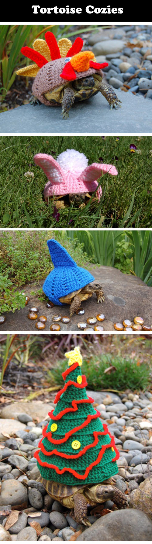 funny-tortoise-wool-cozies-knitted