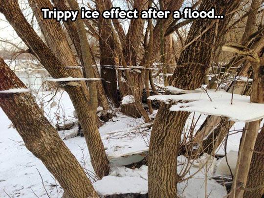 funny-tree-ice-snow-winter-flood
