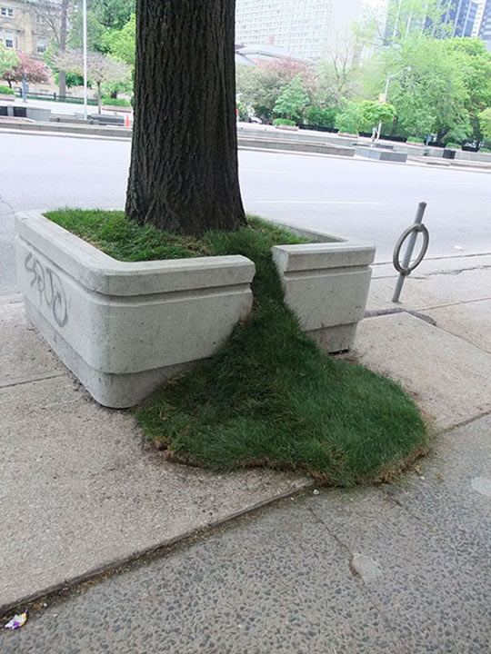 Grass leak…