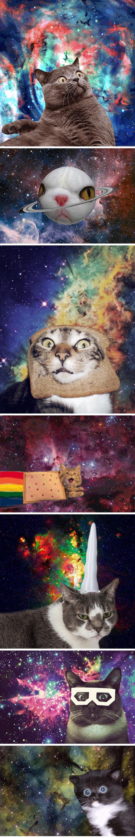 funny-universe-cats-bread-cosmos