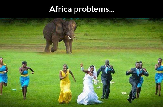 Things you have to deal with in Africa…