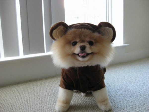 21 Dogs Dressed as Other Animals for Halloween1