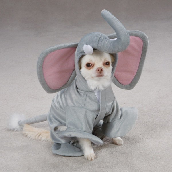 21 Dogs Dressed as Other Animals for Halloween10