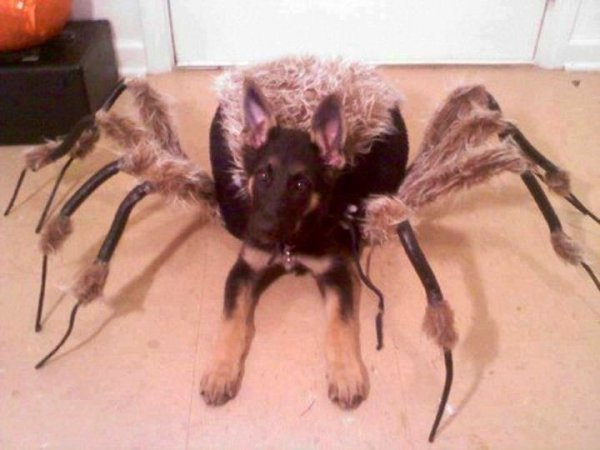 21 Dogs Dressed as Other Animals for Halloween13
