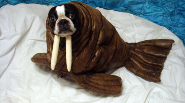 21 Dogs Dressed as Other Animals for Halloween14
