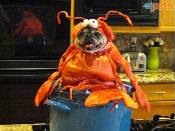 21 Dogs Dressed as Other Animals for Halloween15