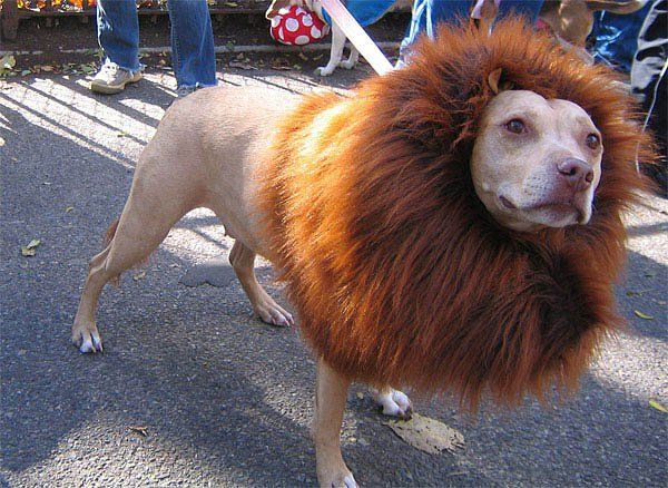 21 Dogs Dressed as Other Animals for Halloween16