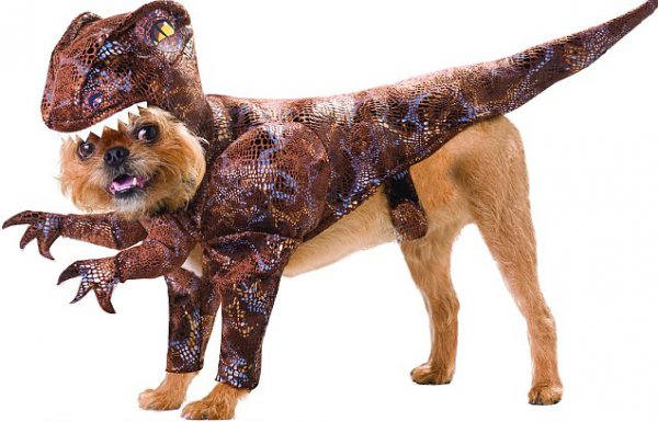 21 Dogs Dressed as Other Animals for Halloween17