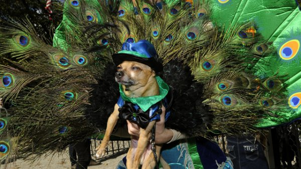 21 Dogs Dressed as Other Animals for Halloween18