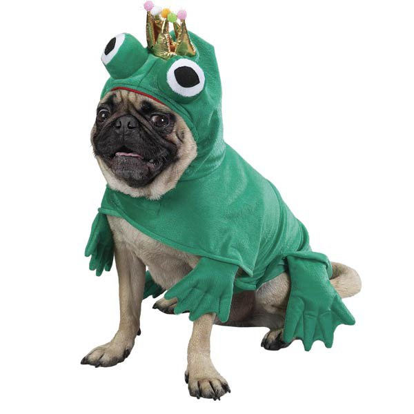 21 Dogs Dressed as Other Animals for Halloween19