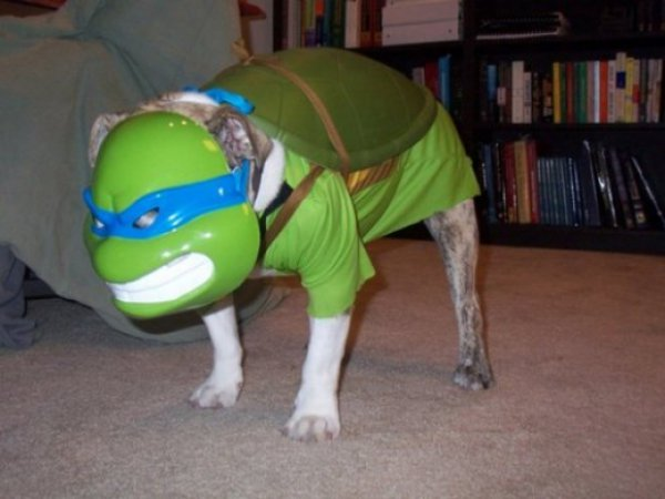 21 Dogs Dressed as Other Animals for Halloween20