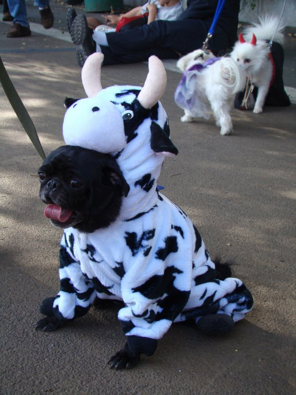 21 Dogs Dressed as Other Animals for Halloween21