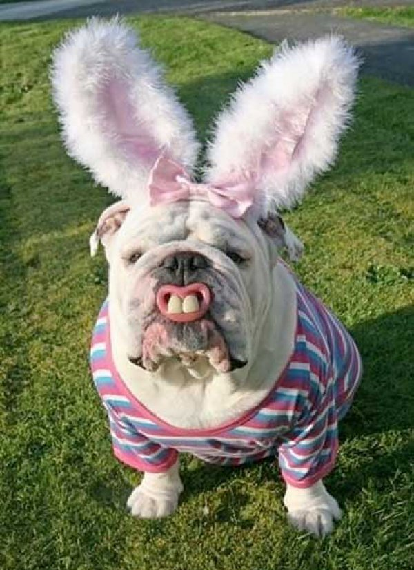 21 Dogs Dressed as Other Animals for Halloween5