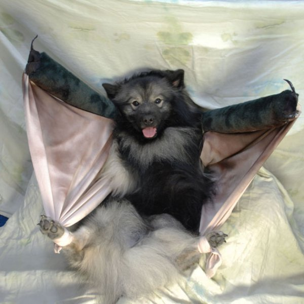 21 Dogs Dressed as Other Animals for Halloween6