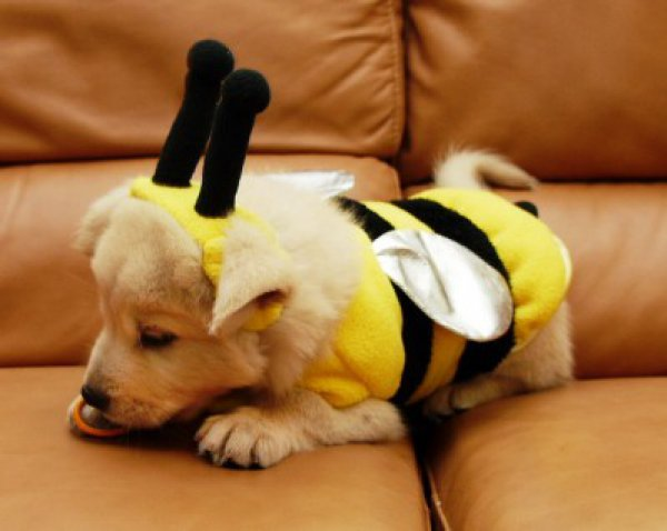 21 Dogs Dressed as Other Animals for Halloween8