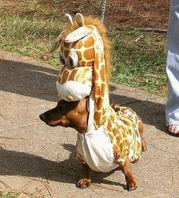 21 Dogs Dressed as Other Animals for Halloween9