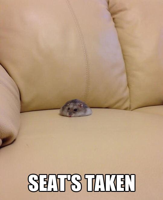 Melting hamster