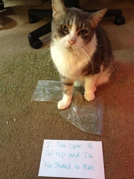 Pet shaming- Drug Edition