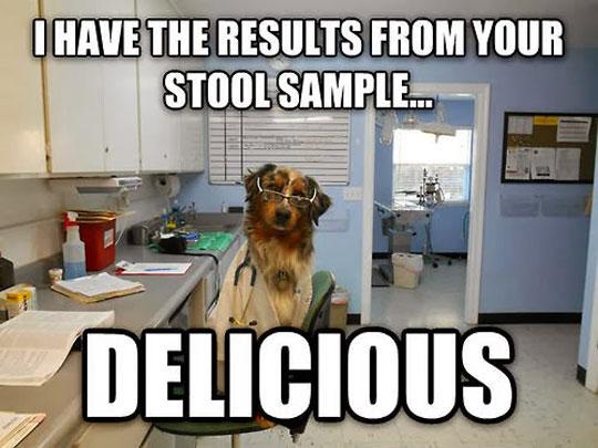 Scientist dog strikes back