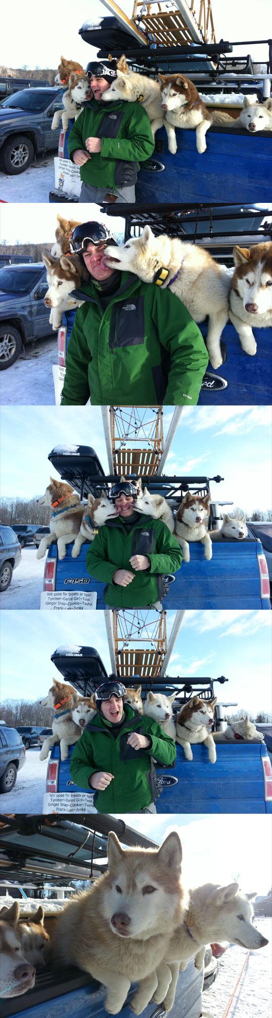 Some affectionate sled dogs