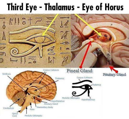 cool-Eye-Horus-human-brain-symbol-third