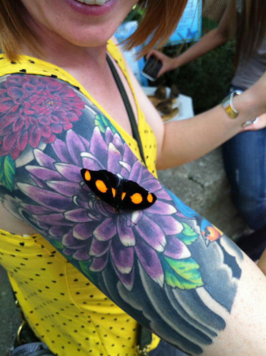 Butterfly gets tricked by a tattoo…