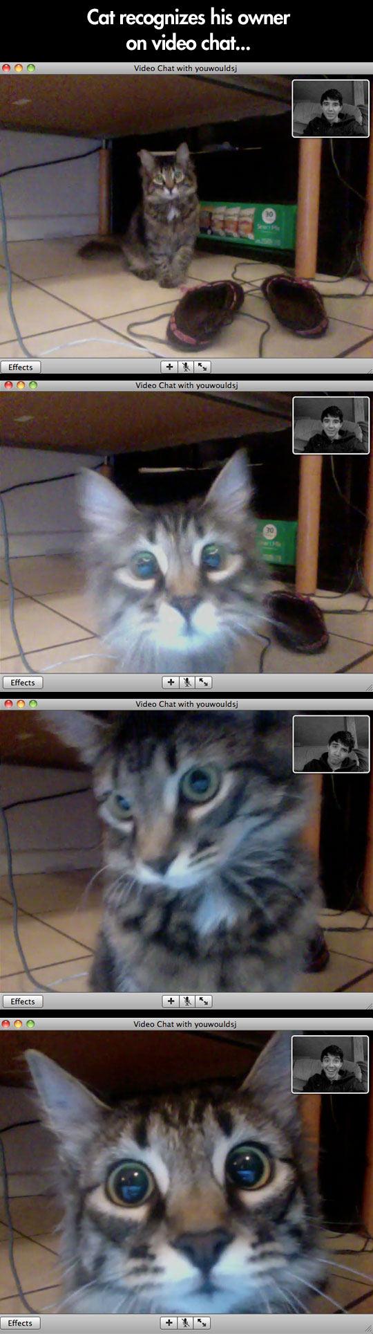 cool-cat-screen-video-call-owner