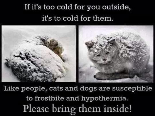 cool-cats-pets-snow-cold-hypothermia