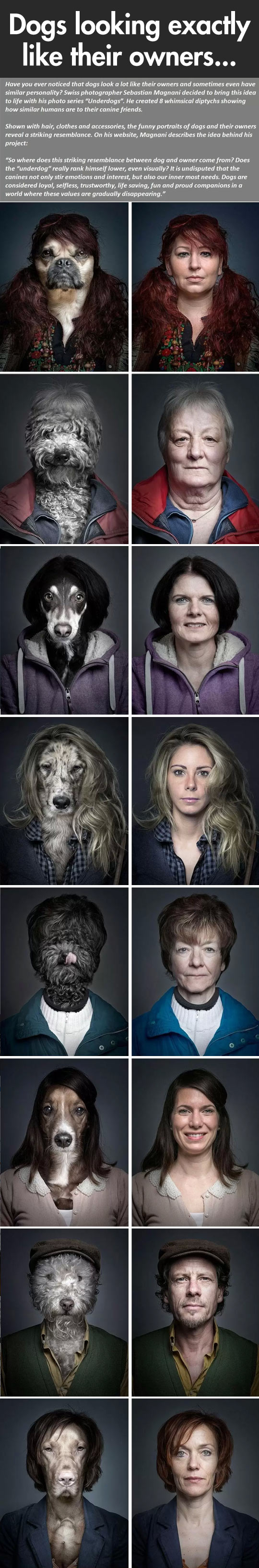 Dogs looking like their owners…