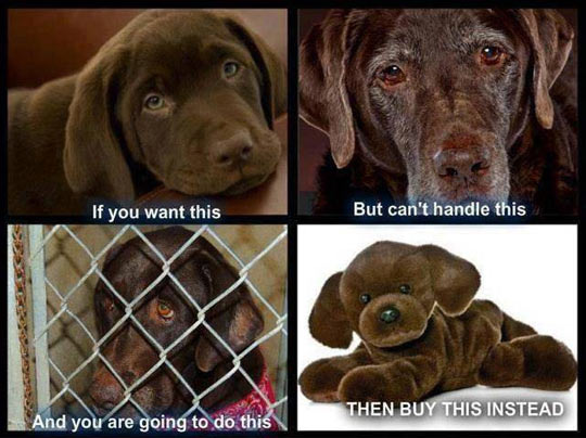 Dogs aren't disposable…