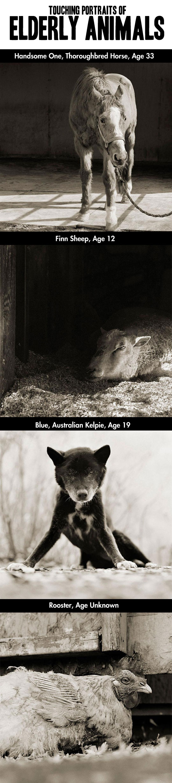 Touching portraits of elderly animals...