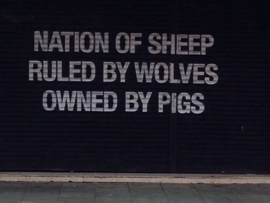 cool-store-wolves-pigs-sheep