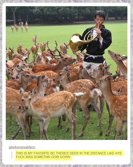 cool-trumpet-deer-song-Tumblr