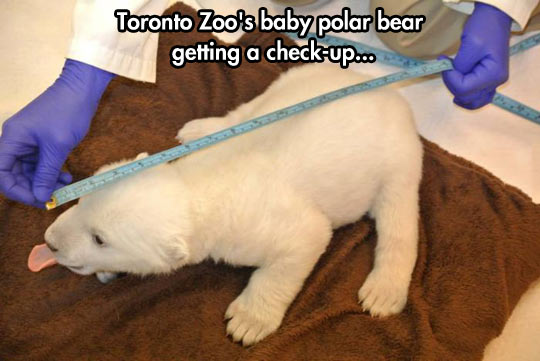 The cutest irreverent polar bear…