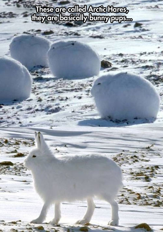 cute-bunny-white-snow-fluffy