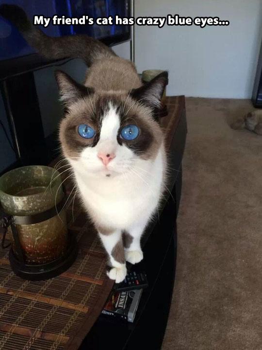 All hail hypno-cat…
