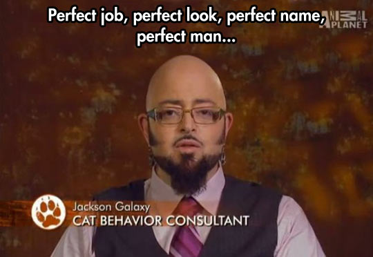 funny-Animal-Planet-TV-show-bald-cat-consultant