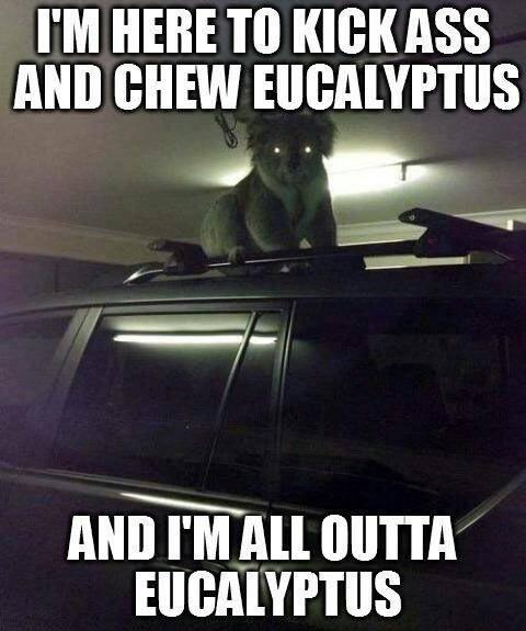 Koala from your nightmares…