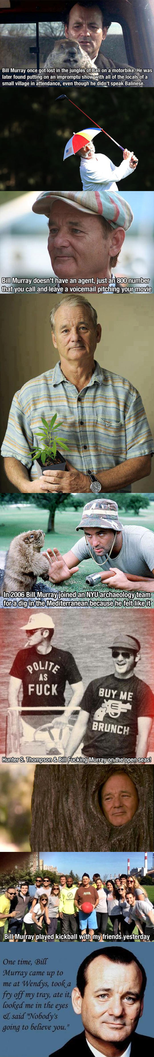 funny-Bill-Murray-images-tribute-actor