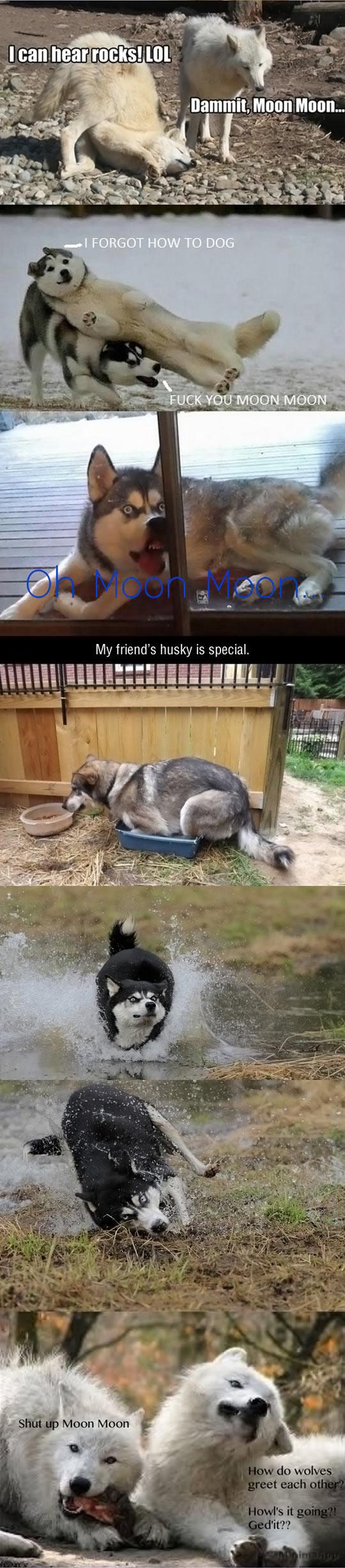funny-Moon-Moon-wolf-Tumblr-dumb