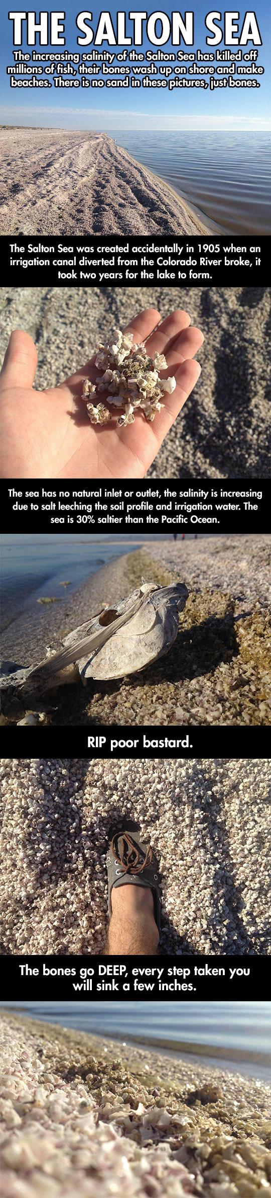 The creepy story of the Salton Sea…