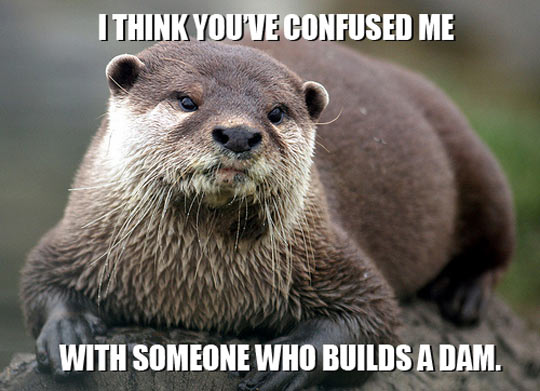 Must have been some otter guy…