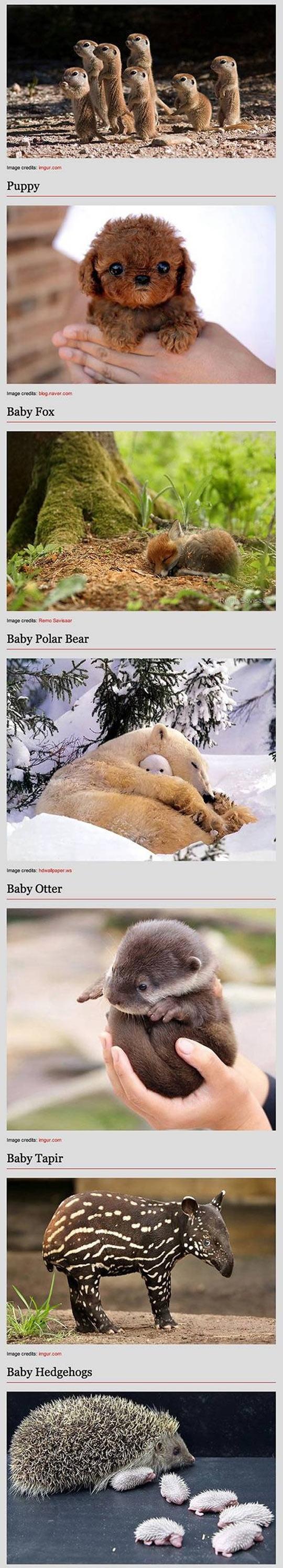 funny-baby-animal-kitten-bunny-panda-hawk