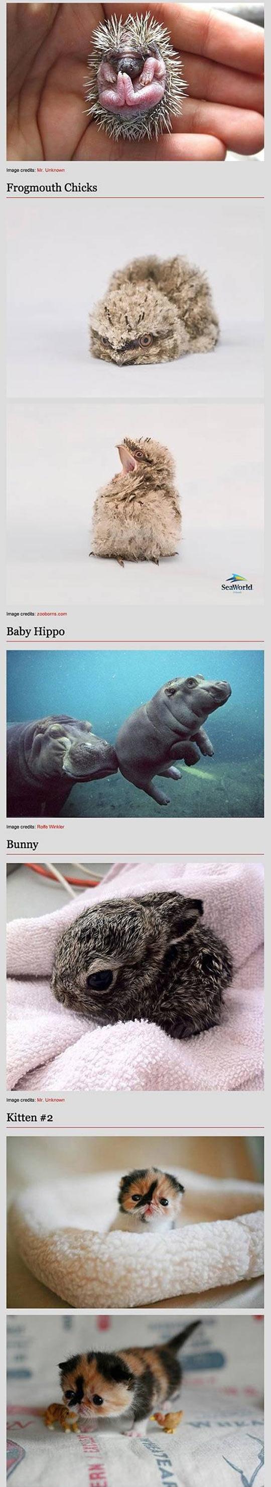funny-baby-animal-kitten-bunny-panda-tapir