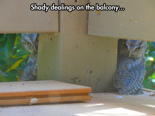 You came to the wrong balcony…