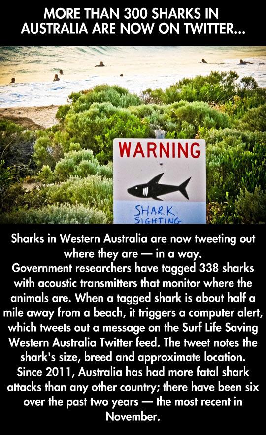 funny-beach-shark-sign-shore-swimming-ocean