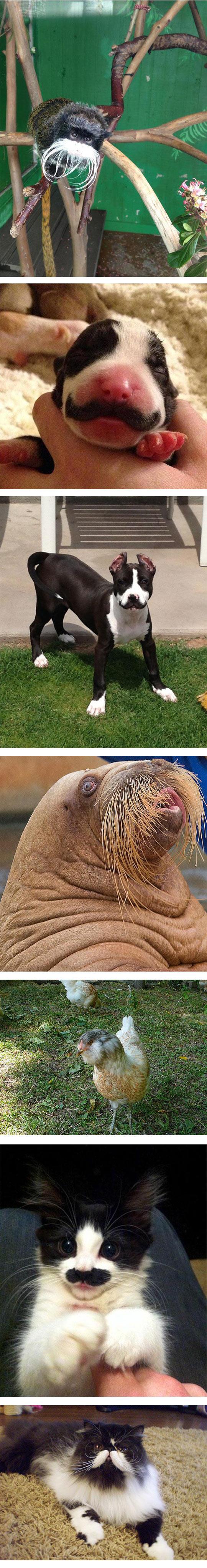 funny-beard-cat-dog-animals