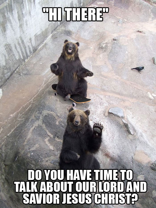 funny bears riding skateboard zoo1 jehovah witness bears