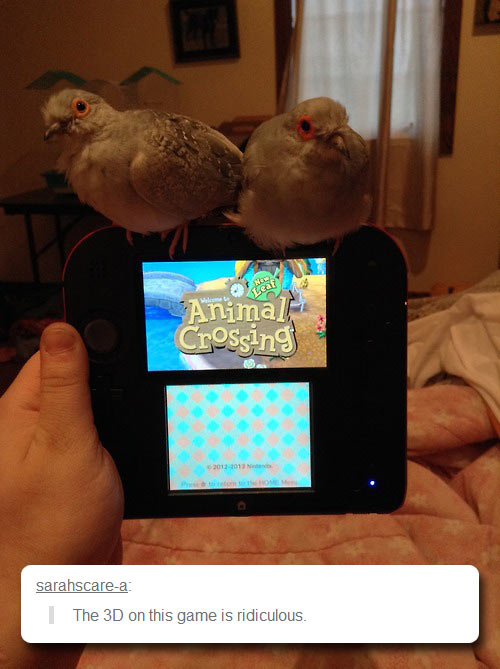 funny-bird-game-console-Animal-Crossing
